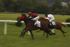 Corsa di cavalli dinamica della st Leger Fotografie Stock