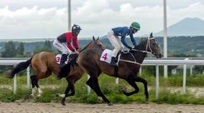 Corsa di cavalli per il premio del Letni in Pjatigorsk Immagine Stock Libera da Diritti