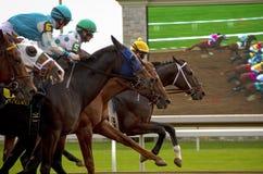 Corsa di cavalli per l'arrivo in Knetucky Immagini Stock