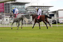 Corsa di cavalli, Yorkshire, Inghilterra Immagine Stock