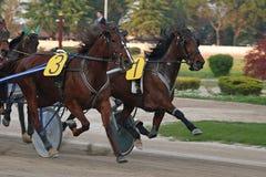 Corsa di cavallo Immagine Stock Libera da Diritti