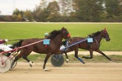 Corsa di cavallo Immagini Stock