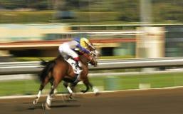 Corsa di cavallo astratta della sfuocatura di movimento Immagine Stock