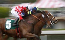 Corsa di cavallo del collo e del collo Immagine Stock