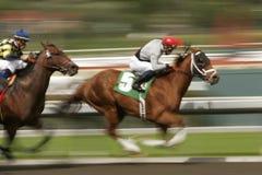 Corsa di cavallo della sfuocatura di movimento Fotografie Stock