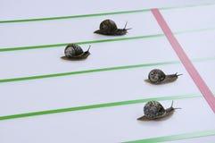 Corsa di grandi escargots. Immagine Stock Libera da Diritti