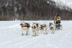 Corsa estrema Beringia della slitta di cane di Kamchatka L'Estremo Oriente russo Fotografie Stock