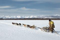 Corsa tradizionale Beringiya della slitta di cane di Kamchatka Fotografia Stock