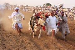 Corsa tradizionale del toro Immagine Stock