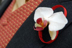 Corsage. Of an orchid pinned to a bridegroom's lapel of his wedding jacket Royalty Free Stock Photos
