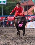 Corse annuali della Buffalo in Chonbburi 2009 Immagine Stock Libera da Diritti