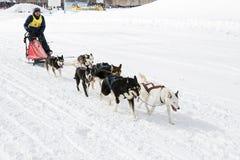 Corse dei cani Beringia della slitta di Kamchatka Fotografia Stock