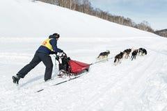 Corse dei cani Beringia della slitta di Kamchatka Fotografia Stock Libera da Diritti