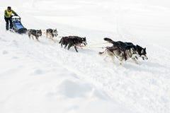 Corse dei cani Beringia della slitta di Kamchatka Fotografie Stock Libere da Diritti