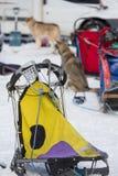 Corse dei cani della slitta Fotografia Stock