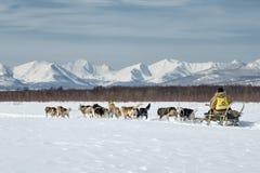 Corse dei cani tradizionali Beringia della slitta di Kamchatka Immagini Stock