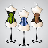 Corset on female mannequin Stock Photos