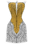 Corset Stock Images