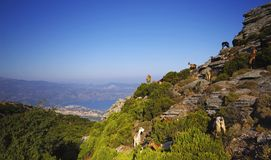 Corsica cape Stock Photography