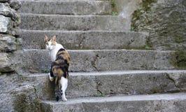 Corsica cat Stock Image