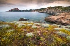 Corsica coastline Stock Image