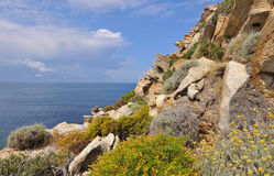 Corsica coastline with flowers Stock Images