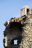 Corsica, Corse, Cap Corse, Upper Corse, France, Europe, island. Corsica, 28/08/2017: detail of the Tower of Santa Maria Chjapella 1549, ruined Genoese tower at Royalty Free Stock Images