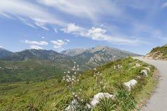 corsica france bergväg Arkivfoton