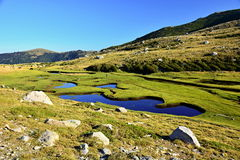 Corsica. Grass, green, mountain, water, Pozzi on corsika island Royalty Free Stock Images