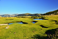 Corsica. Grass, green, mountain, water, Pozzi on corsica island Royalty Free Stock Images