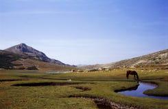 Corsica lake nino. Free horse on nino lake corsica Stock Photo