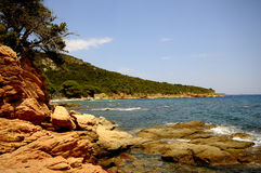 Corsica landscape (france) Stock Image