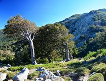 Corsica. Mountain, trees, forest i island Stock Photos