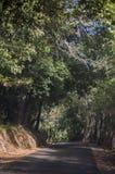 Corsica, nakrętka Corse, Śródziemnomorscy maquis na drodze, jeżdżenie, wijąca droga Obrazy Stock