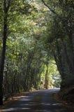 Corsica, nakrętka Corse, Śródziemnomorscy maquis na drodze, jeżdżenie, wijąca droga Obraz Stock