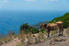 Corsica nice view Royalty Free Stock Photo