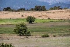 Corsica, Południowy Corsica, wieś, Francja, Europa, lato, podróż Zdjęcia Stock