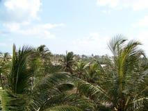 corsica wyspy śródziemnomorska palmowa fotografia brać drzewo zdjęcia stock