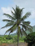 corsica wyspy śródziemnomorska palmowa fotografia brać drzewo Obraz Royalty Free