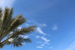 corsica wyspy śródziemnomorska palmowa fotografia brać drzewo Obrazy Royalty Free