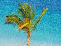 corsica wyspy śródziemnomorska palmowa fotografia brać drzewo Obrazy Stock