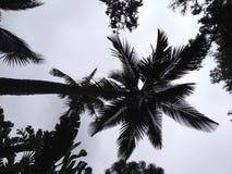 corsica wyspy śródziemnomorska palmowa fotografia brać drzewo Fotografia Stock