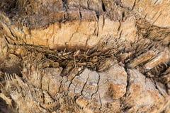 corsica wyspy śródziemnomorska palmowa fotografia brać drzewo tło tekstury szczekać drzewo Zdjęcia Royalty Free