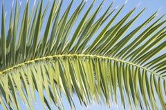 corsica wyspy ?r?dziemnomorska palmowa fotografia bra? drzewo zdjęcia stock
