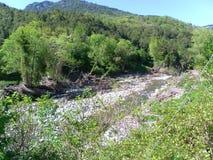 Corsican green landscape Royalty Free Stock Photos