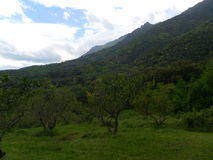 Corsican green landscape Stock Images
