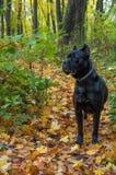 Corso καλάμων στο πάρκο φθινοπώρου Στοκ φωτογραφίες με δικαίωμα ελεύθερης χρήσης
