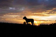 Corso de canne dans le coucher du soleil Photo stock