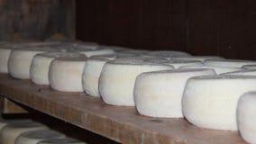 Corso del queso de cabra Imagen de archivo
