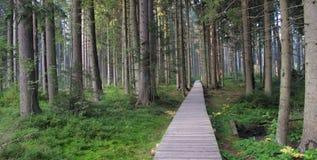 Corso di fasciame alla riserva naturale di Rejvic in Jeseniky Immagini Stock